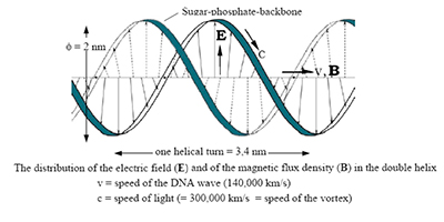 distribution of electric field