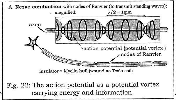 nerve conduction